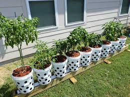 bucket gardening. Can It Really Improve My Container Gardening? You May Be Surprised! - YouTube Bucket Gardening N