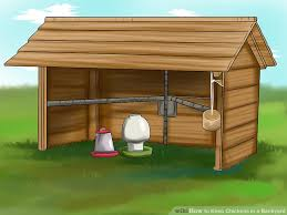 How To Keep Chickens In A Backyard With Pictures  WikiHowHow To Keep Backyard Chickens