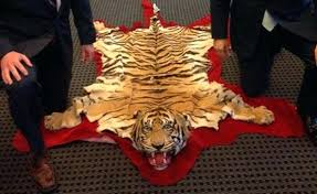 real tiger rug real tiger skin rug with head best rug real tiger skin rug