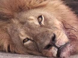 Resultado de imagen de cecil leon