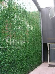 gallery outdoor living wall featuring: sweet vertical garden green wall on a shoestring ivy climbs a mesh of net sitting in regular pots on the ground what a nice way to achieve semi privacy