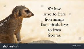 Animal Quote 78 Images In Collection Page 2
