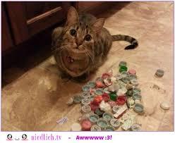 19 Verdammt Lustige Katzenbilder