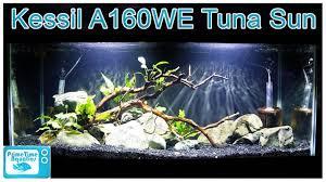 Kessil Aquarium Light Kessil A160we Tuna Sun Aquarium Light Review What A High Quality Light Did To Our Fish Tank