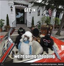 Poodle Memes. Best Collection of Funny Poodle Pictures via Relatably.com
