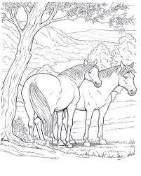 Due Cavalli Liberi A Riposo Sotto Un Albero Disegni Da Colorare E