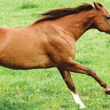 Horse Hoof Supplement Helps Problem Feet Expert Advice On