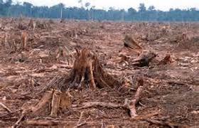 essay on deforestation synopsis  essay on deforestation synopsis