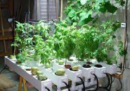 indoor hydroponic vegetable garden. Indoor Vegetable Garden System - Popular Hydroponic Under Hid Metal Halide Plant Grow Light H