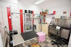 Ветеринарная клиника набор помещений