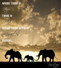 Elephant Quotes Amazing Hope Faith Miracles Elephants Quotes Sayings Follow