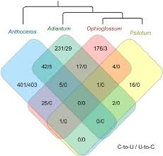 Venn Diagram Of Vascular And Nonvascular Plants Comparison Of Plastid Editing Content Among Plants The Venn