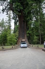 chandelier drive through tree one of the best places on this earth