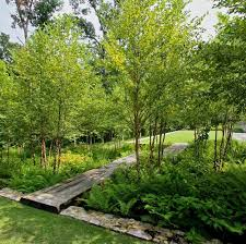 Small Picture The 25 best Woodland garden ideas on Pinterest Forest garden