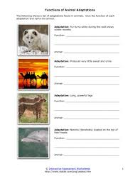 Functions of Animal Adaptations Worksheet for 4th - 7th Grade ...