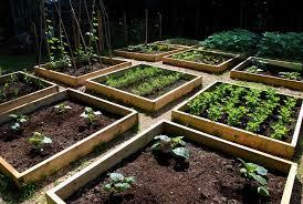 Small Picture Perfect Modest Vegetable Garden Ideas Vegetable Garden Design I