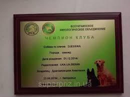 Плакетка подложка сертификат на дереве дипломы деревянные  Плакетка подложка сертификат на дереве дипломы деревянные наградные дипломы сертификаты