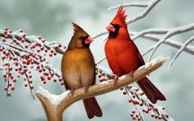 winter cardinal wallpaper.  Winter HD Wallpaper  Background Image ID713376 Intended Winter Cardinal