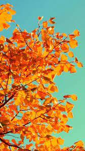 Fall Tumblr Wallpaper on WallpaperSafari
