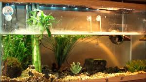 Turtle Tank Decor Extraordinary Design Turtle Decorations For Home Interesting Ideas