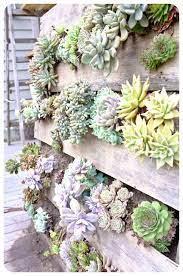 pallet vertical succulent wall garden