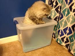 ... Cat Litter Box. A Proper Er Charleston Crafted