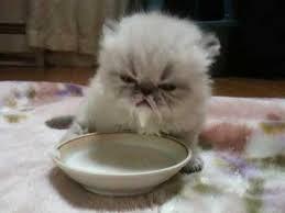 cute kitten with milk moustache