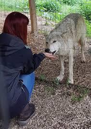 In the latest blog article Nadine... - Wolf Science Center Österreich    Facebook