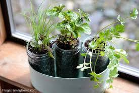 diy windowsill herb garden simple