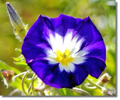 names of blue flowers blue flowers by name 7 background wallpaper names of blue flowers in names of blue flowers