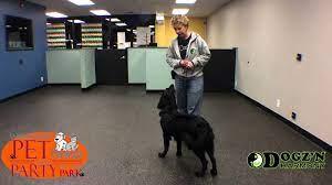 Westmont Pet Promenade - Dog Training - YouTube