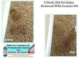 pet stains on wool carpet carpet cleaning pet how to remove carpet stain how to remove pet stains on wool