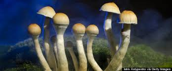 What We Really Know About Psychedelic Mushrooms Huffpost