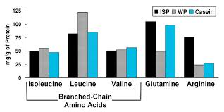 Protein Absorption Chart Research Review Fast Vs Slow Whey For Protein Synthesis