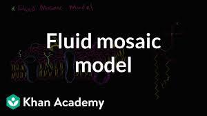 Fluid Mosaic Model Of Cell Membranes Video Khan Academy