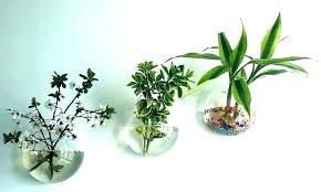 wall planter indoor succulent wall planter indoor hanging planters mounted plant ind wall planter indoor