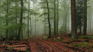 Foggy Forest Wallpaper Wide #5Fv ...