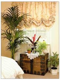 plants for bedroom. best plants for a bedroom