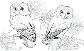 Hard Owl Coloring Pages Hard Owl Color Pages Color Bros Hard Owl