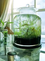 Indoor Water Garden Jars