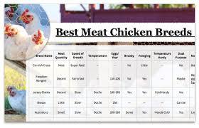 Chicken Sizes Chart Meat Chicken Breeds