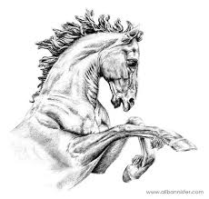 wild horse drawings in pencil. Perfect Wild Pencil Drawing Wild Horses  Of Helios I Flickr  Photo Sharing  Horse Intended Drawings In