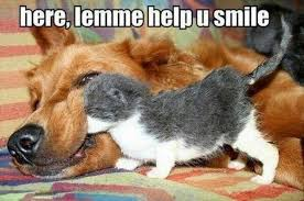 Help you smile in Animal Memes - Memes - HAHAFUNNYJOKES via Relatably.com