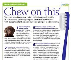 Pfizer Canine Dental Chart By Net Channel Canine Dental Chart Pfizer