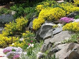 Small Picture 596 best Desert Landscaping images on Pinterest Landscaping