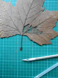 Designs Made From Leaves This Delicate Artwork Is Made Using Nothing But Fallen