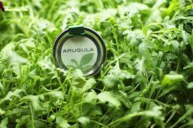 arugula growing in a garden