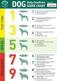 Why A Raw Dog Food Diet Is My Choice Amos Pearce