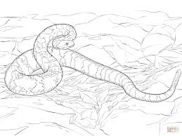 Small Picture Free Printable Snake Coloring Pages For Kids Throughout With