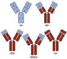 Nomenclature Of Monoclonal Antibodies Wikipedia